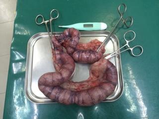 子宮蓄膿症2.jpg